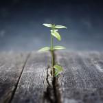 Det er vigtigt du udvikler dine færdigheder (foto se-institute.dk)